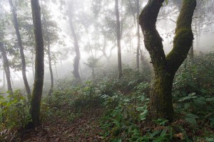 Fog along a forest trail in Pokhara, Nepal.