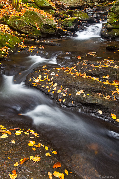 Hubbard Brook with Beech Leaves