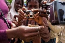 Haiti, Haitian, Parc la Visite, lizard, digital camera, photo, Frame of Mind