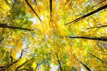 autumn, trees, color, Vermont
