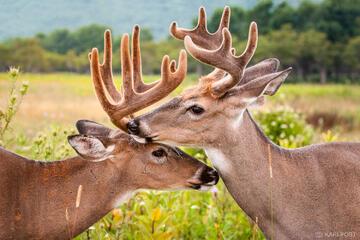 Friendly Bucks