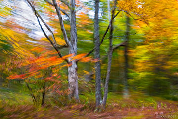 NJ, New Jersey, North America, Stokes State Forest, USA, United States, abstract, autumn, blur, fall