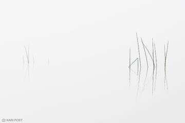 Adirondack Park, Adirondacks, NY, New York, North America, USA, United States, abstract, fog, lake, minimalist, mist, plant, reflection, white