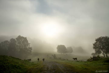 Chesterfield, NH, New England, New Hampshire, North America, USA, United States, bucolic, calm, calming, cattle, cow, dreamy, farm, farm animal, fog, landscape, morning, pasture, scenic, silhouette, s
