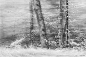 B&W, B+W, B/W, Great Smoky Mountains National Park, North America, Southeast, Tennesee, USA, United States, abstract, black and white, blur, landscape, monochrome, plant, scenic, tree