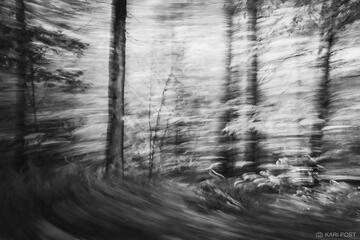 Forest Whirlpool