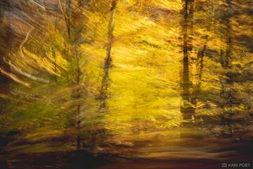 A Painter's Impression of Autumn