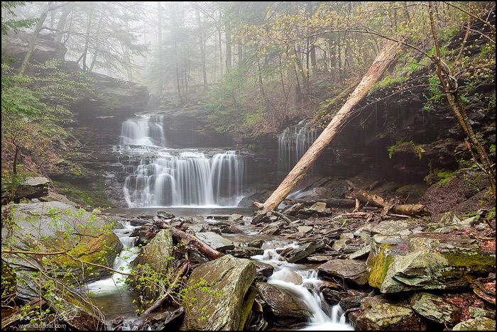 spring, RB Rickett's Falls, Rickett's Glen, Rickett's Glen State Park, Pennsylvania