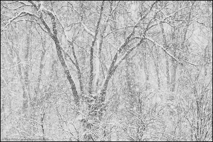 Saddle River County Park, New Jersey, winter, snow storm, snow, storm, trees