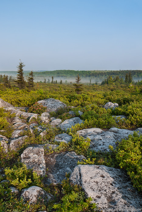 West Virginia, Dolly Sods, Dolly Sods Wilderness, morning, Bear Rocks, mist, meadow, rocks, landscape