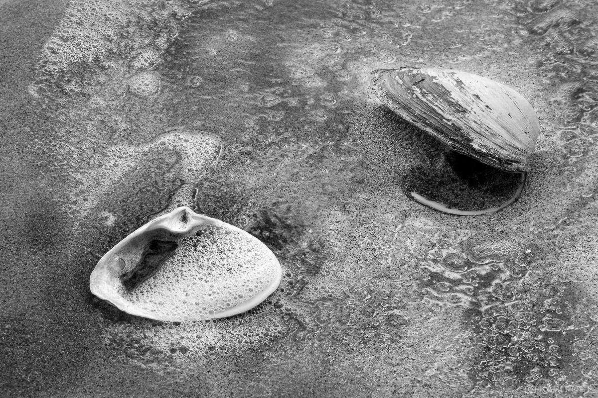 Clam shells on the beach.