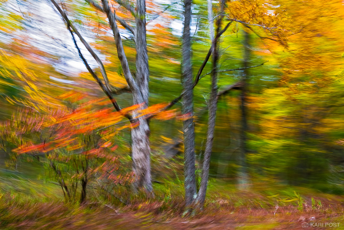 NJ, New Jersey, North America, Stokes State Forest, USA, United States, abstract, autumn, blur, fall, photo