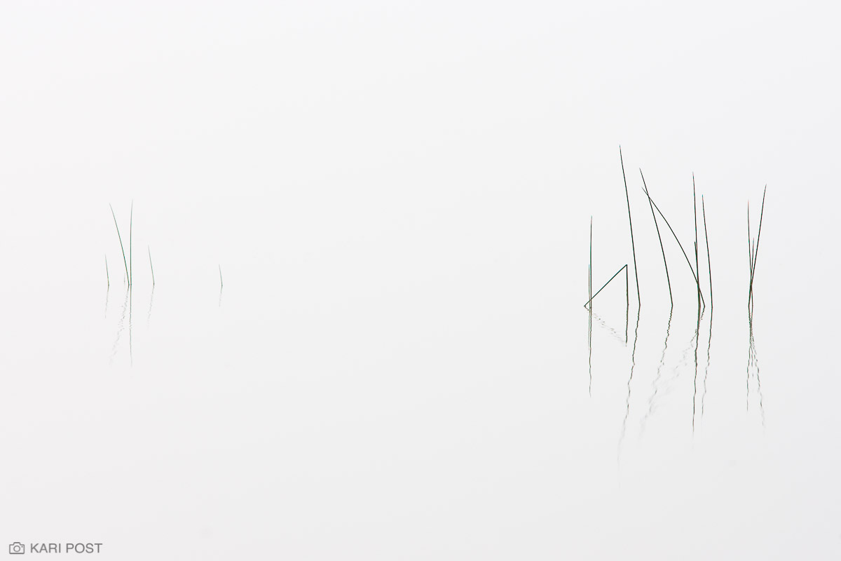 Adirondack Park, Adirondacks, NY, New York, North America, USA, United States, abstract, fog, lake, minimalist, mist, plant, reflection, white, photo