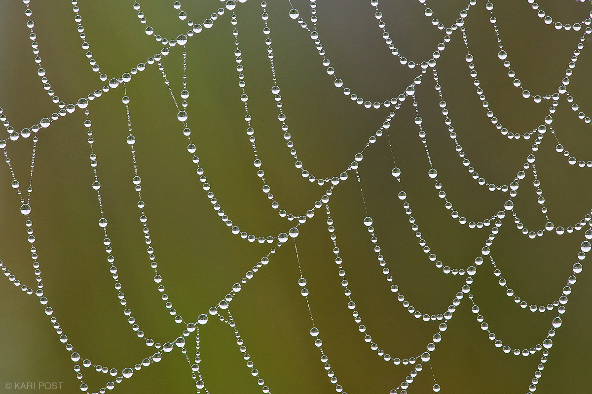 dew, spider's web, photo