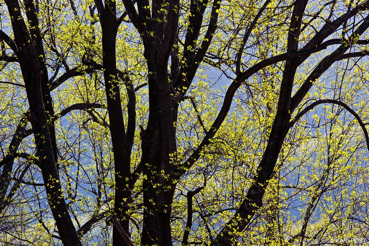 spring, Shenandoah National Park, Shenandoah, Virginia, photo