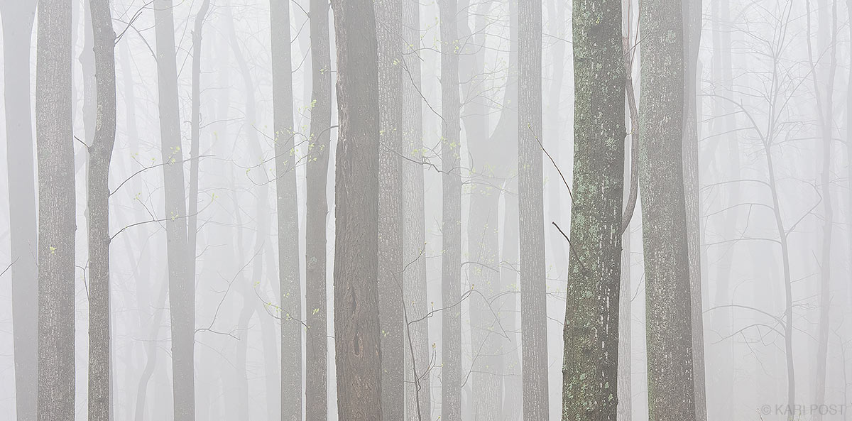 Shenandoah, Shenandoah National Park, national park, Virginia, spring, tree, tree trunks, fog, layers, damp, photo