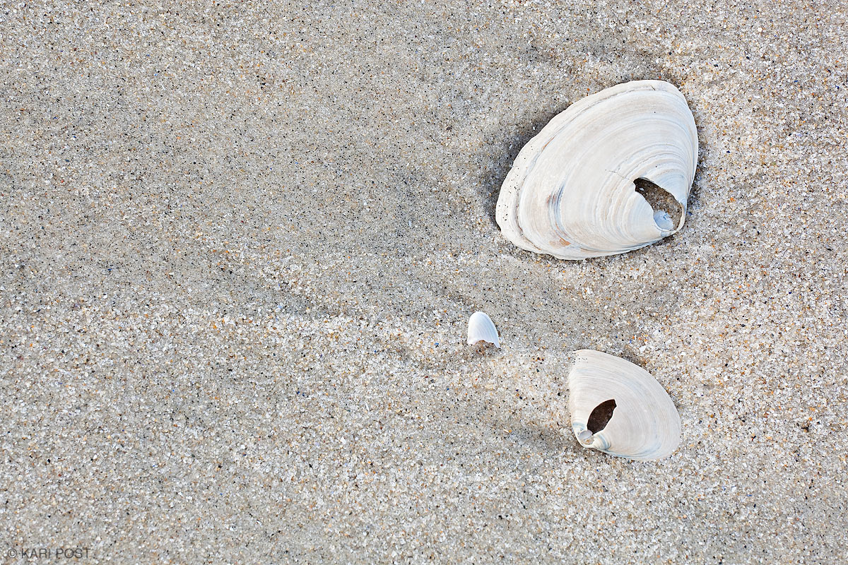 New Jersey, Jersey shore, beach, sand, shell, clam shell, close-up, photo