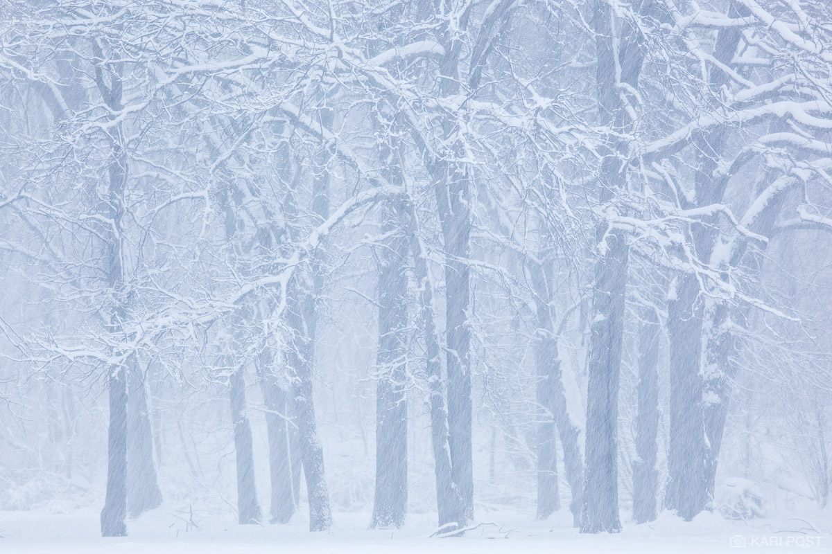 Snow partially obscures a row of trees on a winter day.