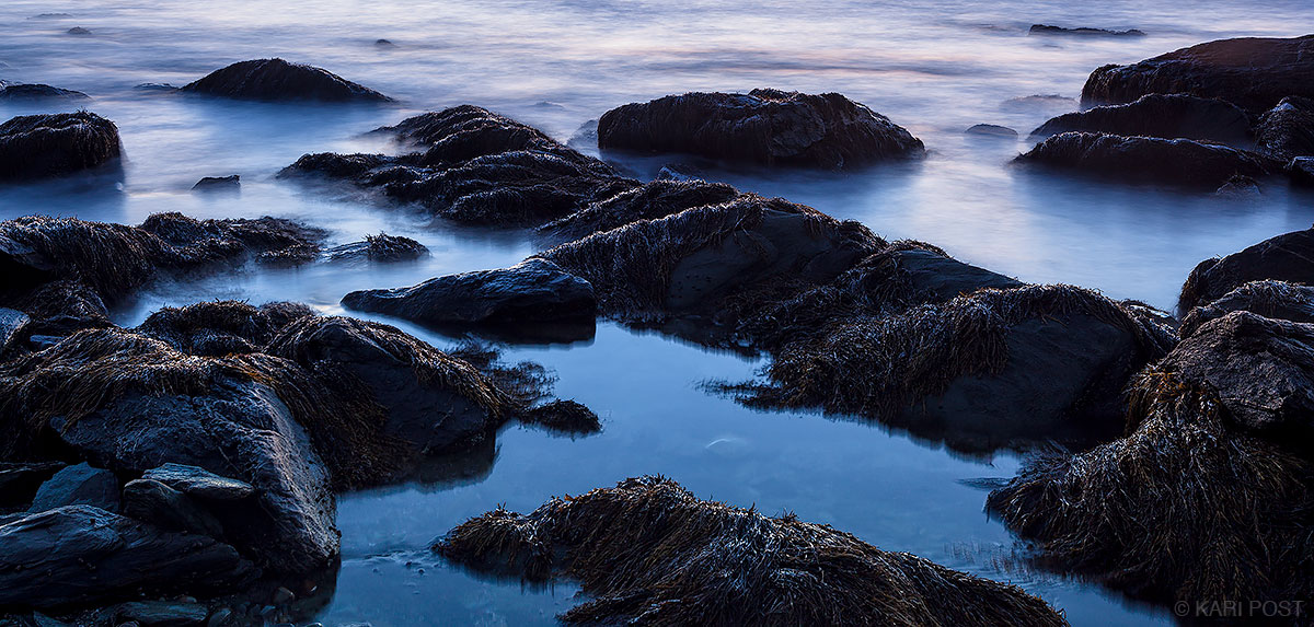 blue, dawn, seaweed, rocks, Rhode Island, coast, Sachuest Point, Sachuest Point National Wildlife Refuge, photo