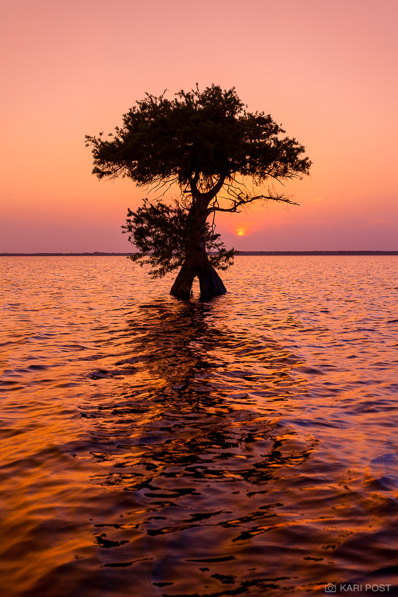 Blue Cypress Lake, FL, Florida, North America, Southeast, USA, United States, backlit, cypress tree, gold, lake, landscape, orange, pink, plant, reflection, scenic, silhouette, sunset, tree, water, photo