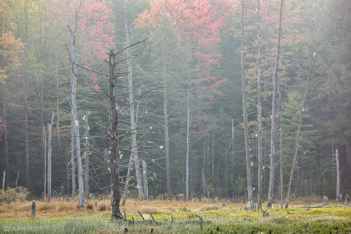fog, beaver meadow, autumn, spider web, dead tree, photo