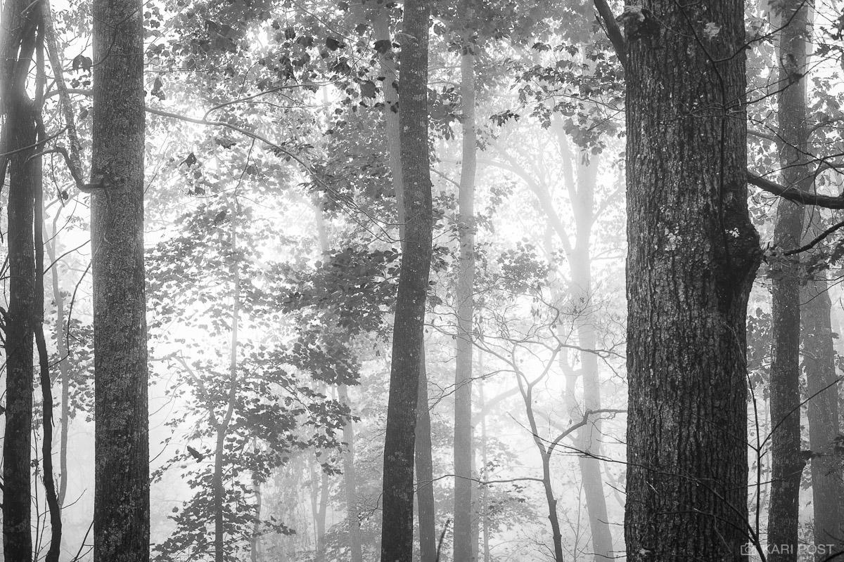 B&W, B+W, B/W, black and white, Chattahoochie National Forest, GA, Georgia, North America, Southeast, USA, United States, autumn, backlit, fall, fog, forest, monochrome, plant, tree, photo