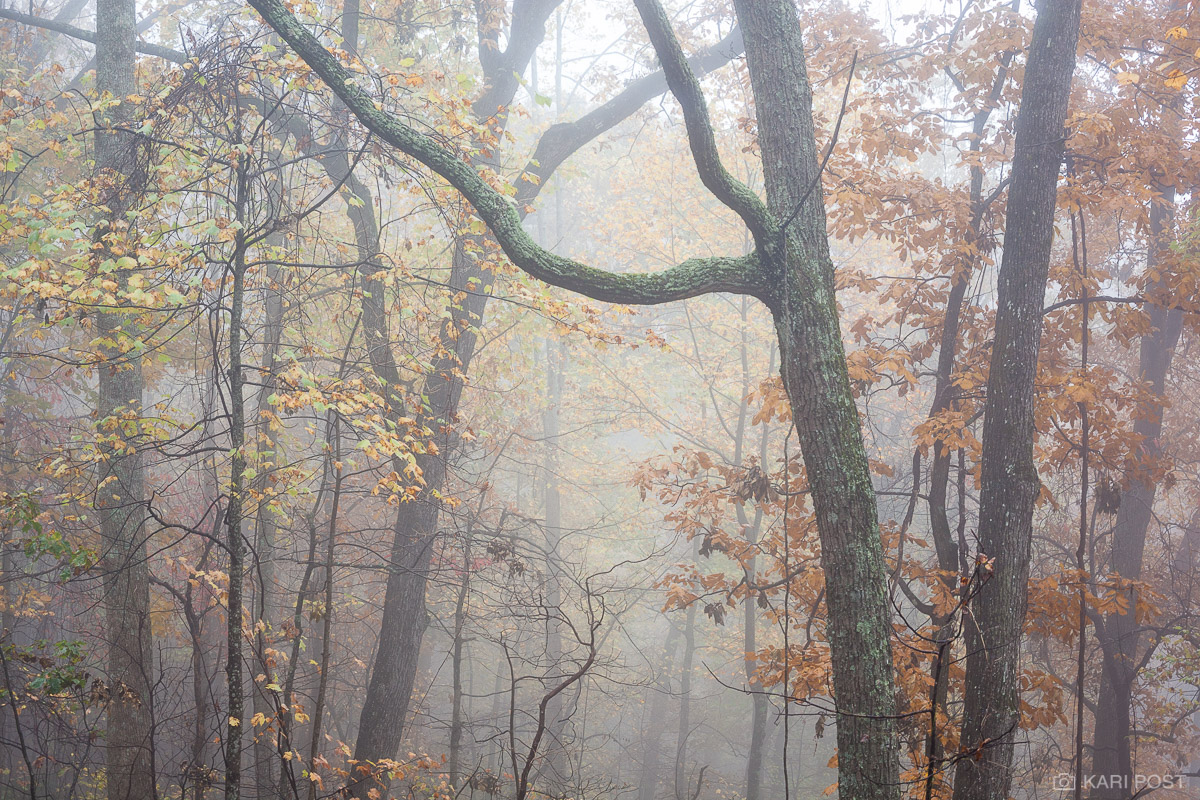 Thick fog shrouds autumn trees in the Chattahoochie National Forest.