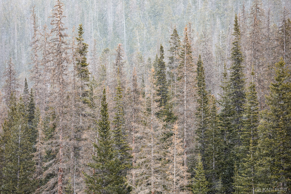 CO, Colorado, North America, USA, United States, West, Rocky Mountain National Park, tree, snow, winter, RMNP, forest, landscape, plant, scenic, spring, snowflakes, photo