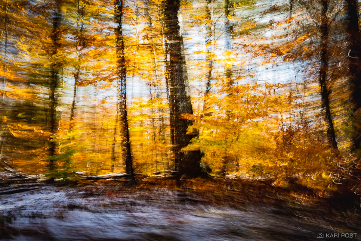 An artistic image of October snow that left a dusting of white on the ground while golden autumn leaves attempt to cling to the...