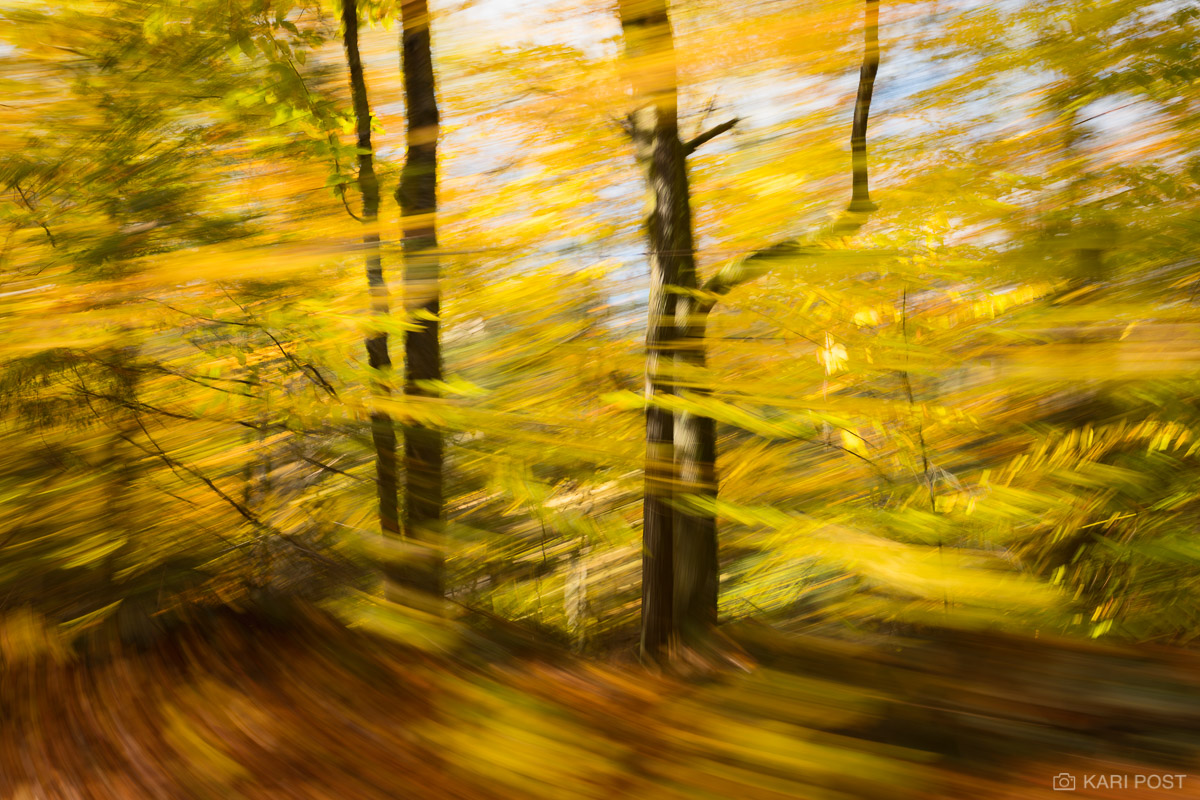 An artistic photograph of autumn trees with yellow leaves.